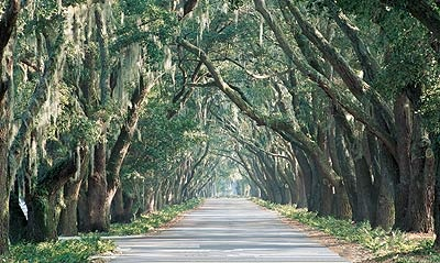 Belfair's Historic Avenue of Oaks